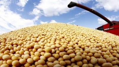 Estiman una caída  de la producción de soja en Entre Ríos