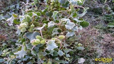 Junio comenzó helado en Entre Ríos, pero anuncian días soleados
