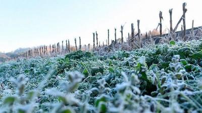 Las heladas dominaron el paisaje en el amanecer entrerriano