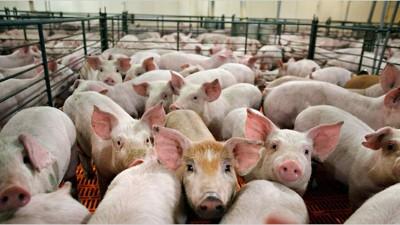 Legisladores y funcionarios analizan el proyecto chino de inversión en porcinos