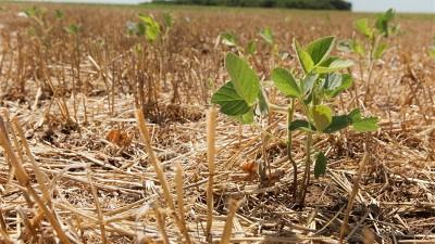 La sequía afecta a 11 provincias y genera pérdidas en la actividad agropecuaria