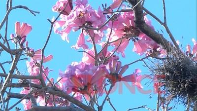 La primavera se acerca y sube la temperatura: Prevén hasta 28 grados