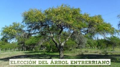 Se abrió la votación para elegir el árbol entrerriano