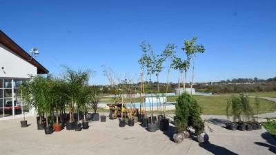 Plan de paisajismo en los terrenos del predio termal