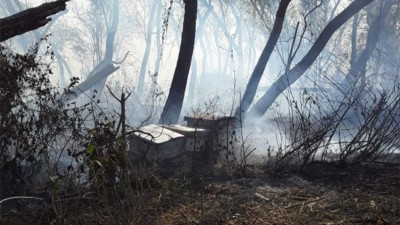 Denuncian cuantiosas pérdidas en el sector apícola por incendios en las islas