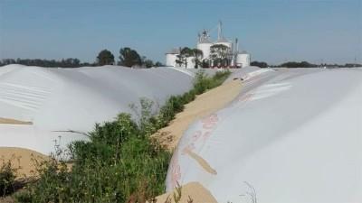 Ya destruyeron 169 silobolsas en lo que va del año: la mayoría en Santa Fe