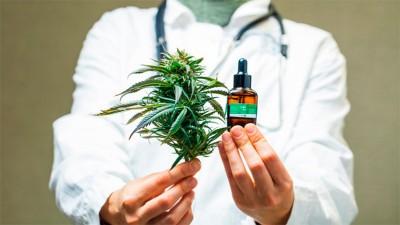 Autorizaron el cultivo de cannabis medicinal y la venta de aceites en farmacias