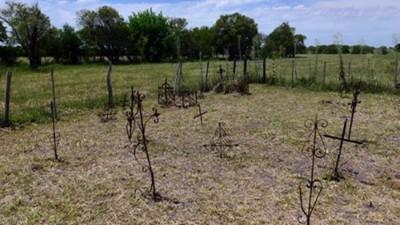 Se adjudicó la obra de puesta en valor del Cementerio de Negros de Sajaroff