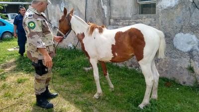 Habían robado un caballo e intentaron cambiarle la apariencia