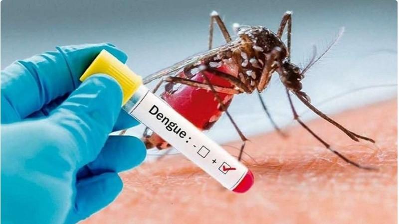 Dengue: Qué es, cuáles son los síntomas, y cómo se transmite, se trata y se previene
