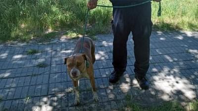 Perro cayó a una piscina con agua en descomposición y fue rescatado