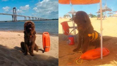 Sam, es el primer perro guardavidas que vigila las playas correntinas