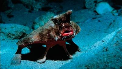 Santafesinos capturaron extraño pez de origen marítimo en el río Coronda
