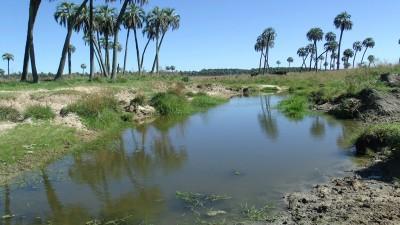 La provincia financiará proyectos con impacto local que beneficien el ambiente y la comunidad