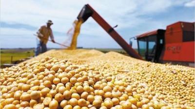 La soja frenó su alza de precios y comenzó a caer: a qué se debe