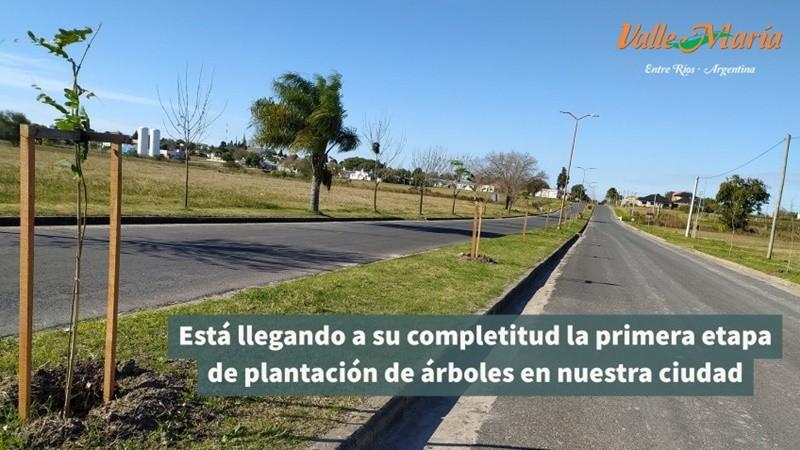 Está llegando a su completitud la primera etapa de plantación de árboles en nuestra ciudad