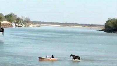 Dramática bajante: cruzaron un caballo caminado frente al puerto de Diamante