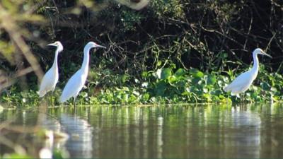 ONG expresa su preocupación ante el peligro que vive la reserva del humedal