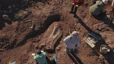 Descubren restos fósiles de un dinosaurio de entre 96 y 99 millones de años