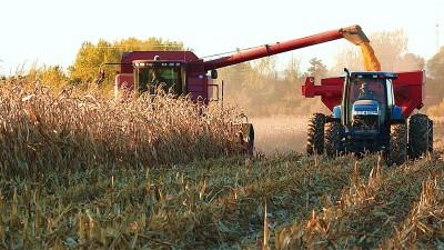 ¿El fin de un reinado?: la soja registrará la menor área sembrada en quince años