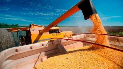 Avanza el maíz: se podría exportar récord histórico de 38 millones de toneladas