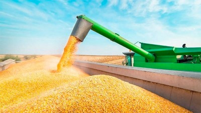 El gobierno exige nuevos requisitos para las exportaciones de maíz